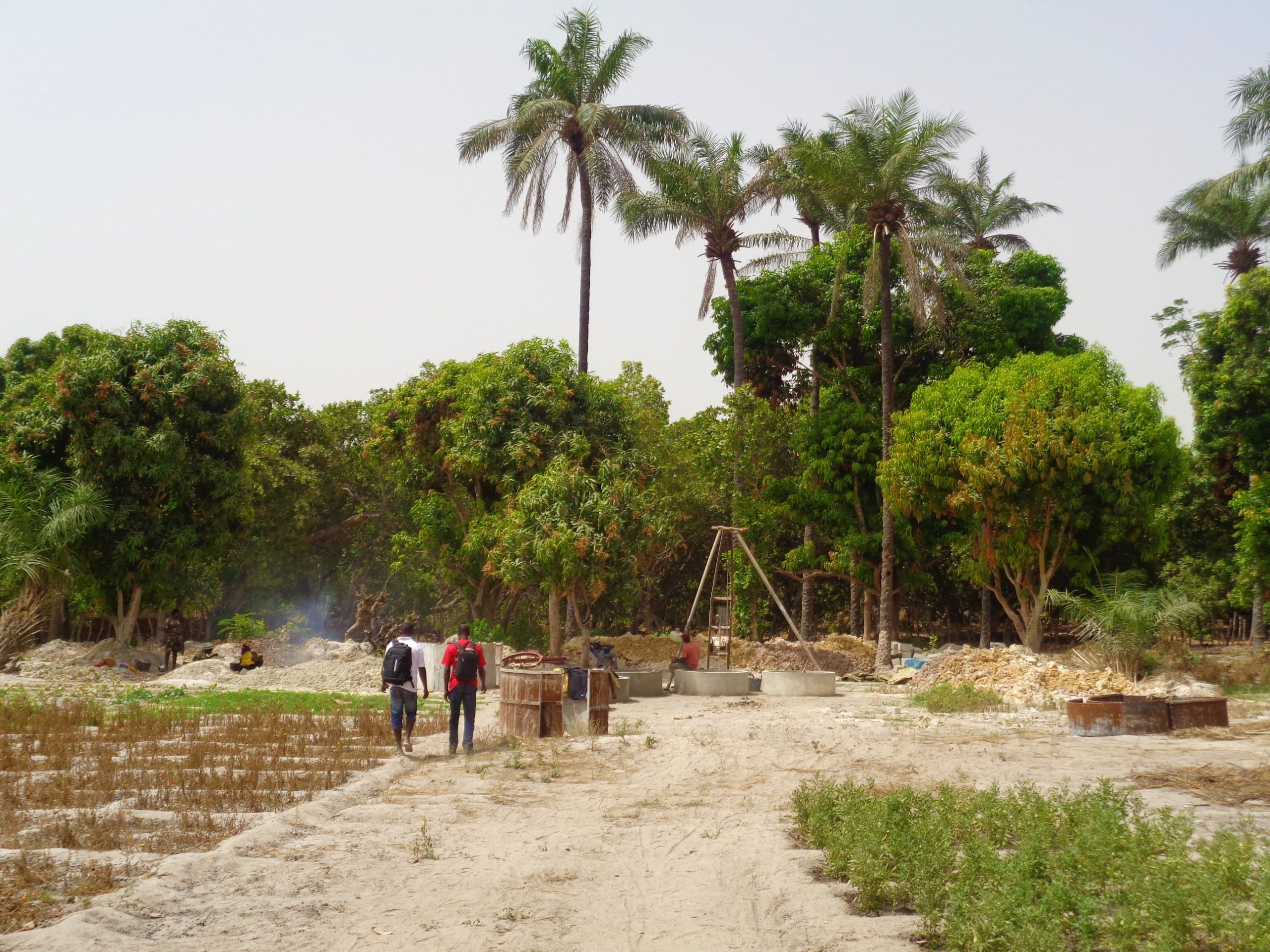 pomodoro locale contro pomodoro senegalese_2329_GB_mani_tese_2017
