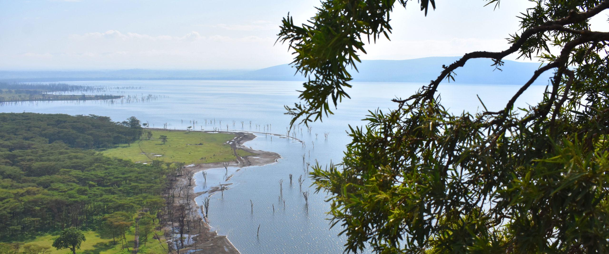 Nakuru lago albero Kenya Mani Tese 2017