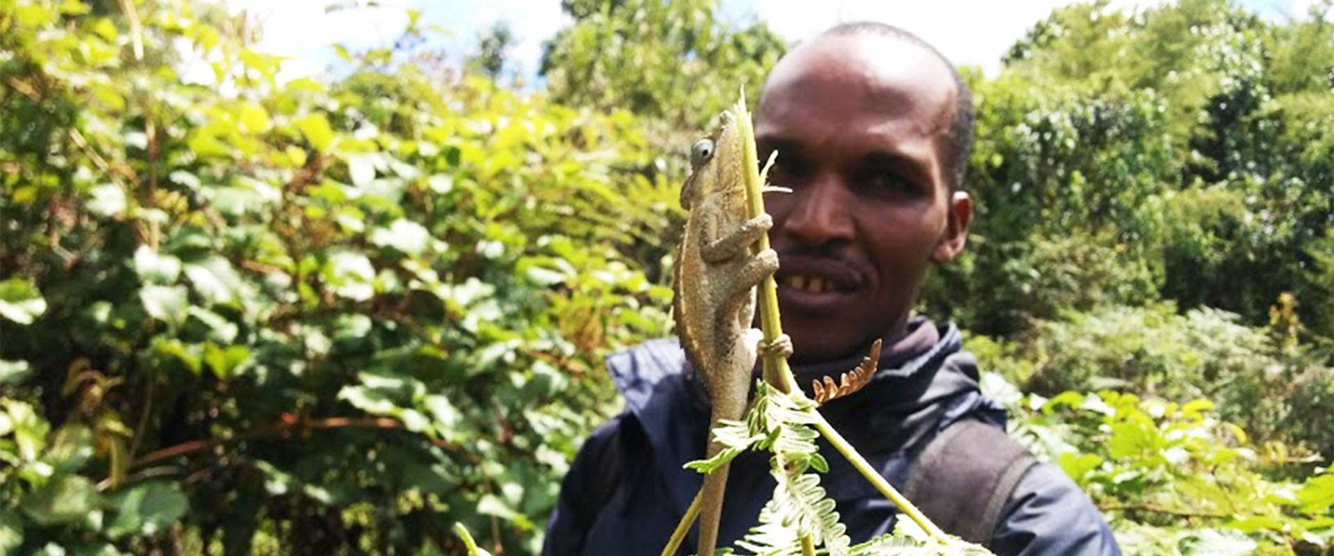 foresta mau camaleonte Mani Tese Kenya 2017