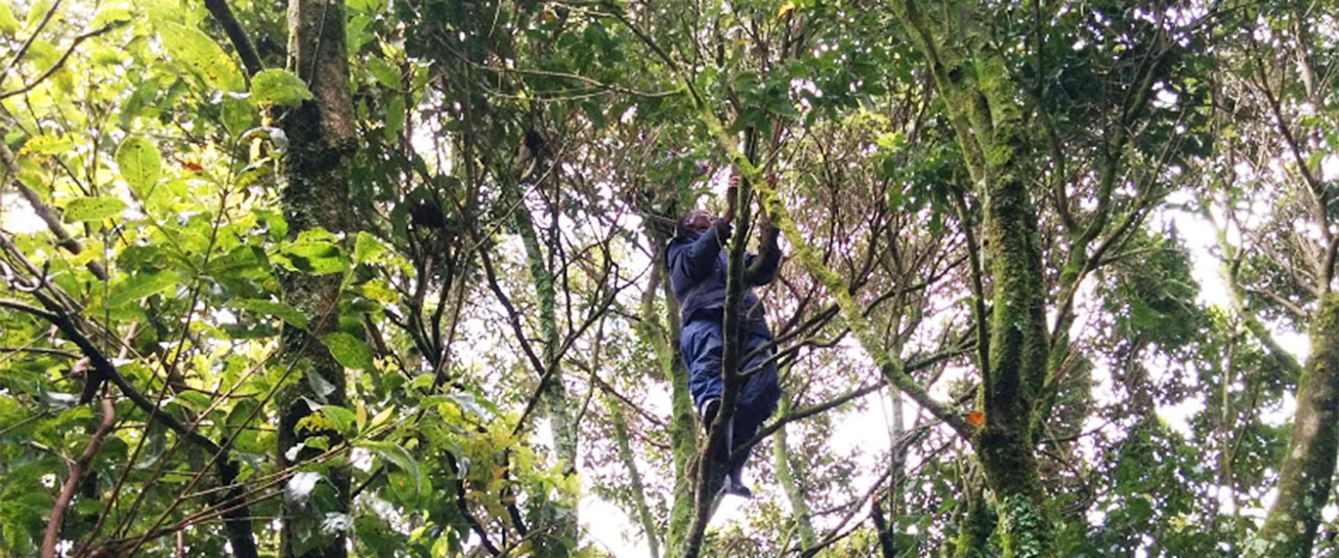 foresta mau uomo Mani Tese Kenya 2017