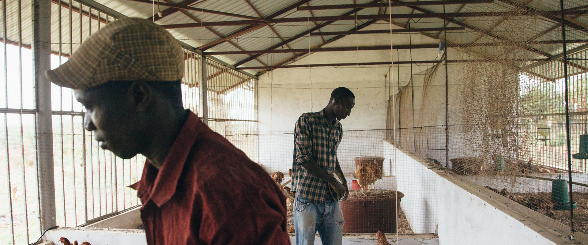 pollaio polli Guinea Bissau Mani Tese 2017