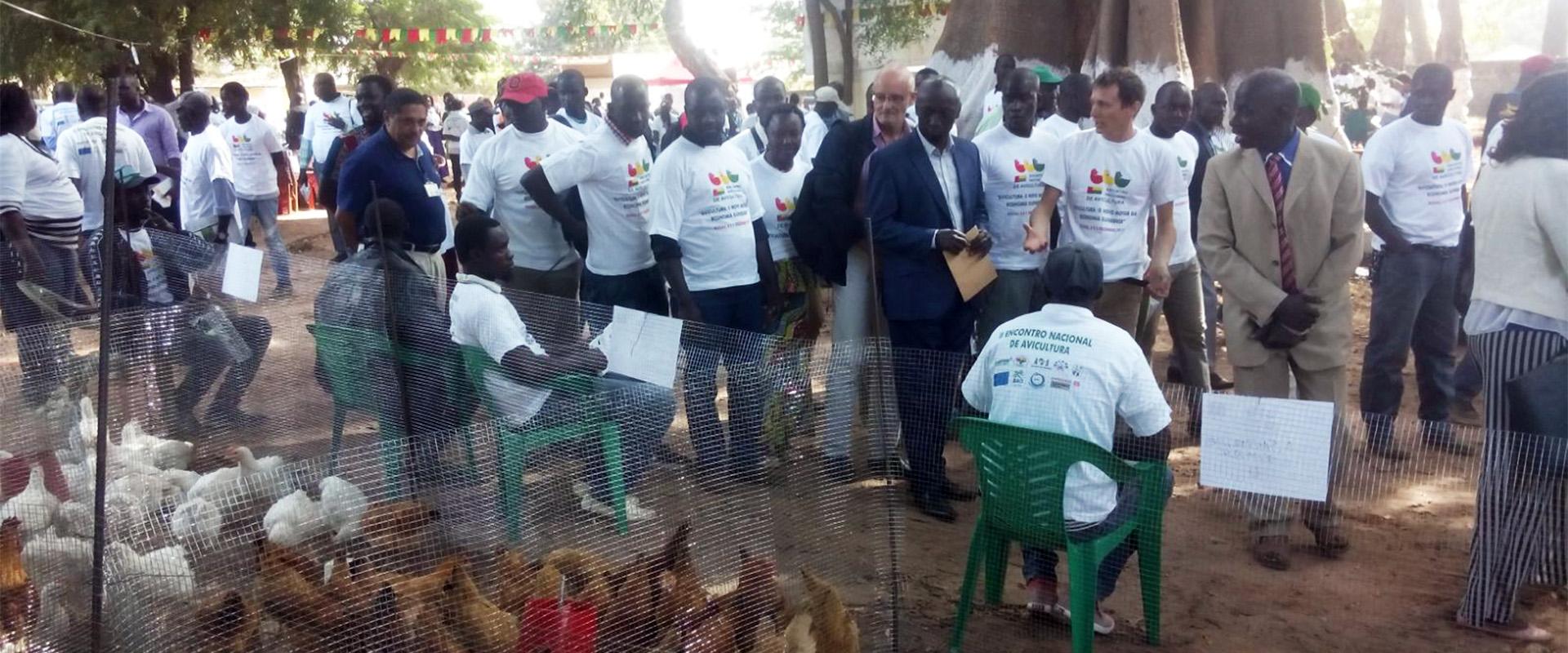 fiera avicoltura polli allevatori Guinea Bissau Mani Tese 2018