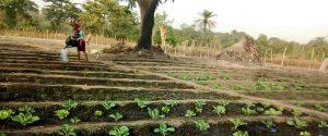 orto comunitario irrigazione ortaggi Guinea Bissau Mani Tese 2018