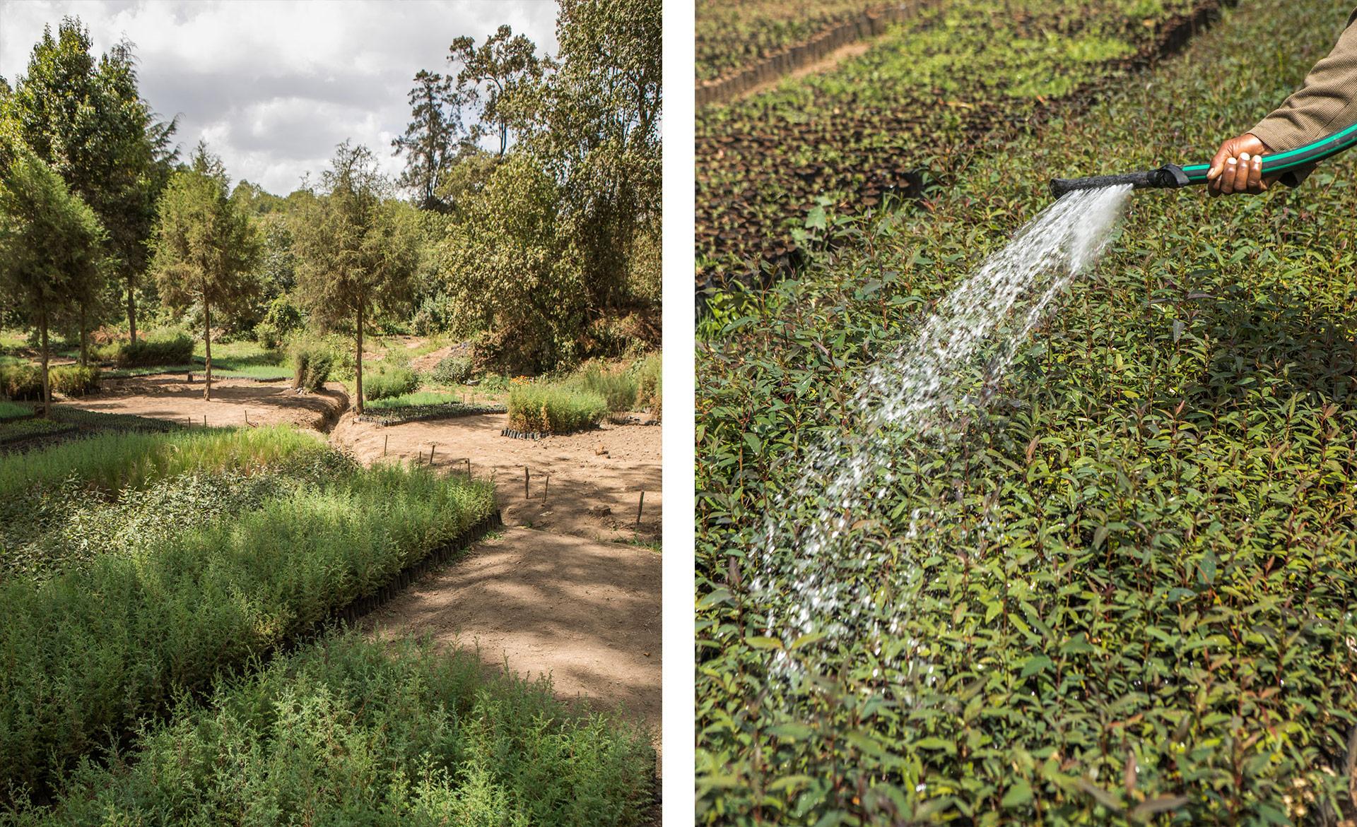 stufa salomè irrigazione matteo de mayda kenya mani tese 2018
