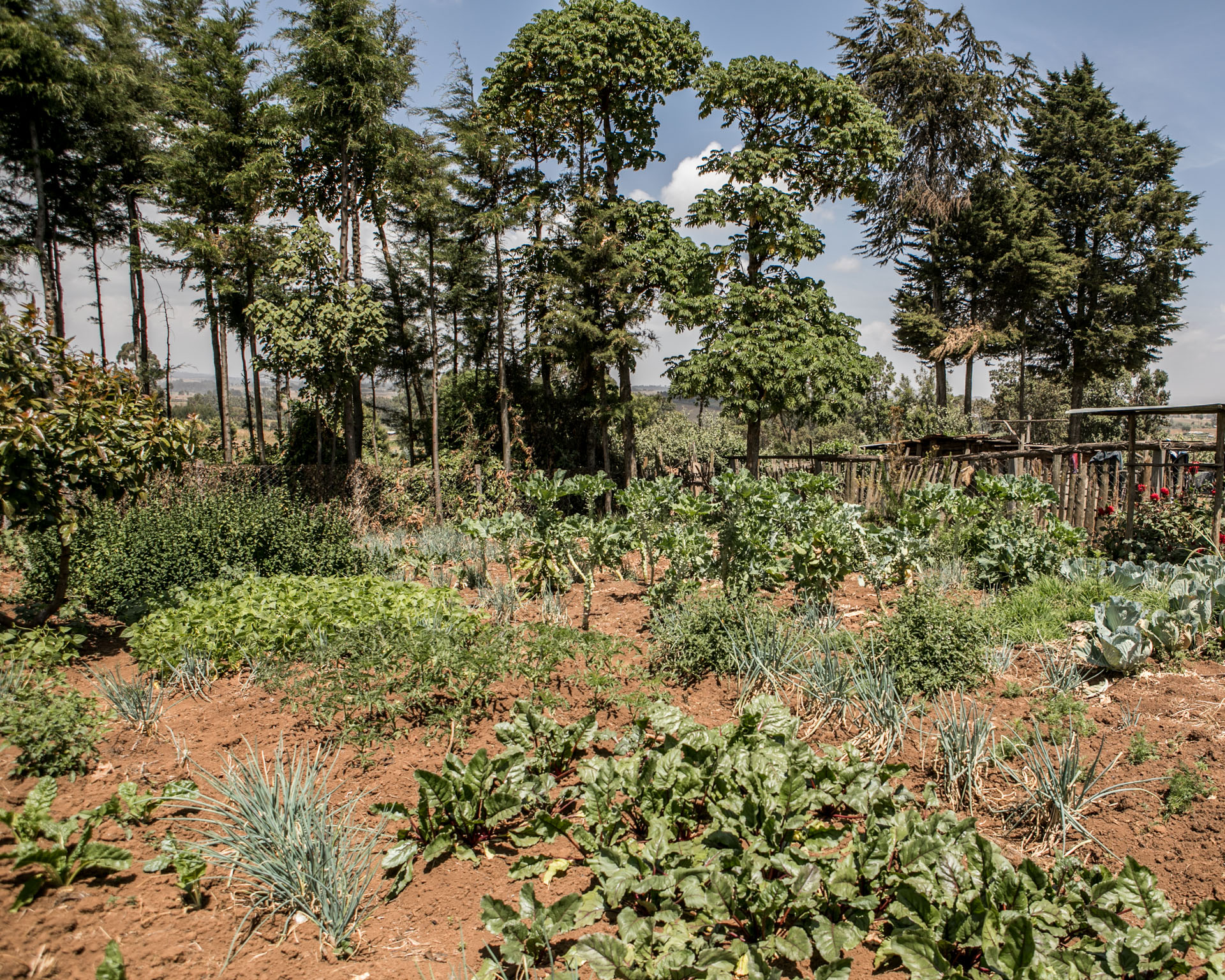 stufa salomè orto matteo de mayda kenya mani tese 2018
