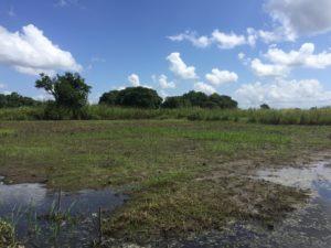 campi mais arachidi inondati mozambico mani tese 2019