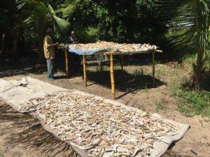 manioca marcia essiccazione emergenza mozambico mani tese 2019