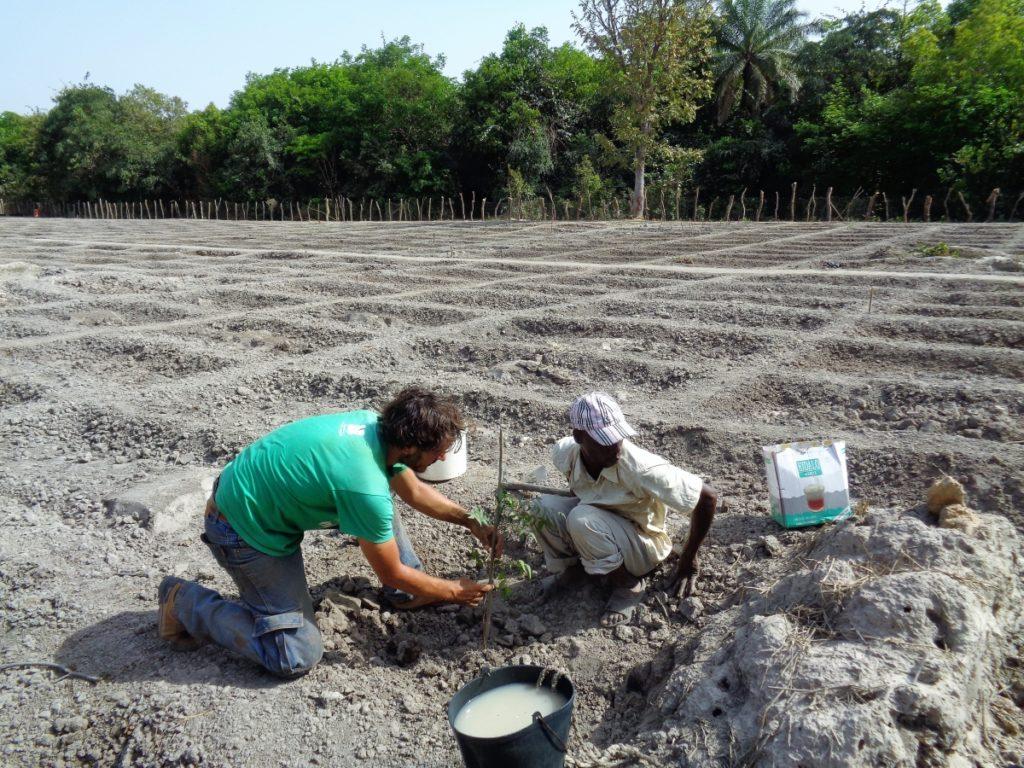 Quelimane Agricola mani tese 2019 (1)