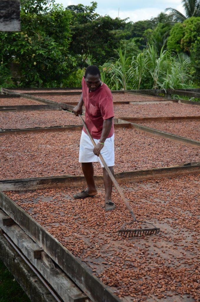 essiccazione cacao piccoli produttori ecuador mani tese 2019