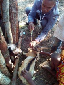 vaccinazione capre cure veterinarie mozambico mani tese 2019
