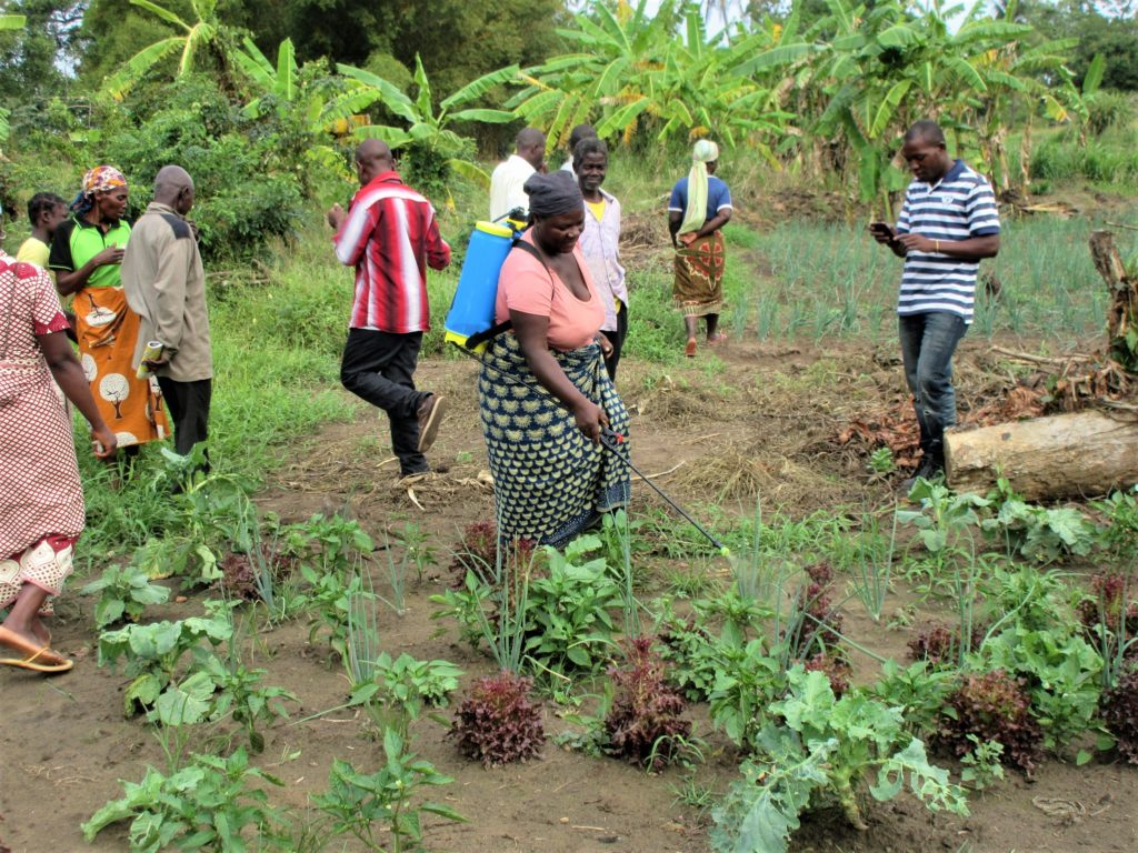 in mozambico le piogge non fermano attività agricola mani tese 2020_4