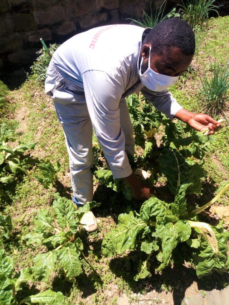 telephone farming la formazione rurale in kenya ai tempi del coronavirus_mani tese 2020_2