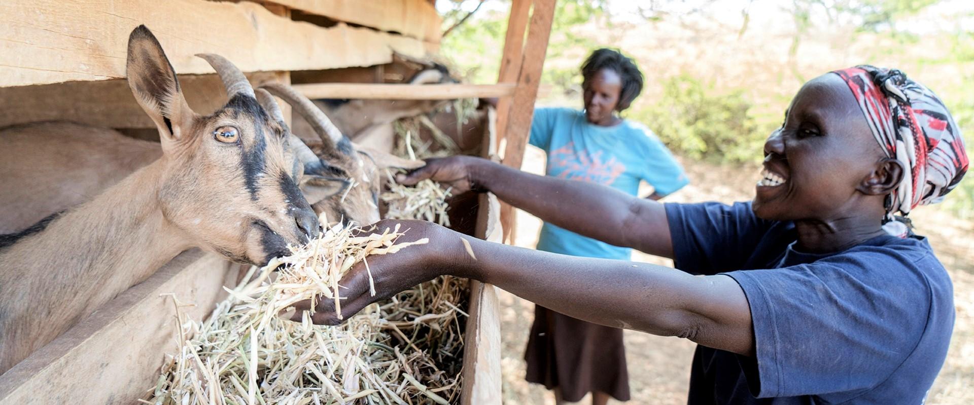 progetto maziwa kenya mani tese 2021